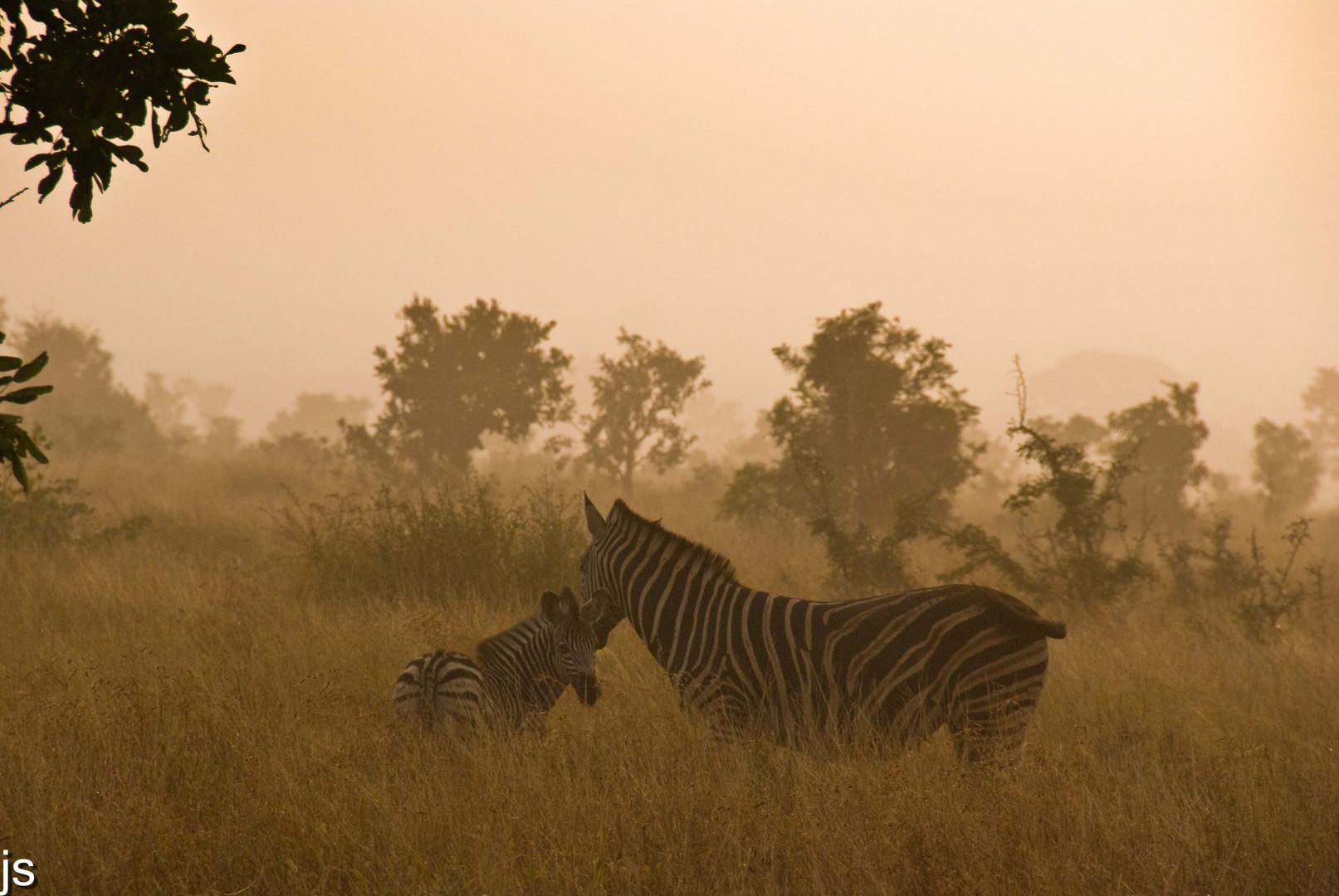 Afrika am Morgen