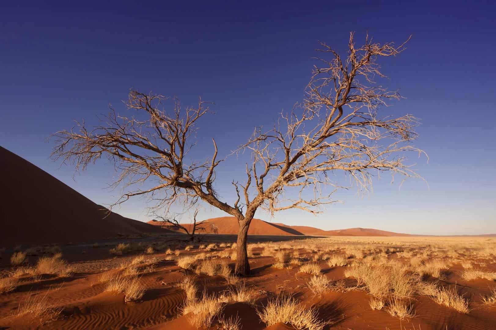 Afrika - die Sossusvlei Dünen