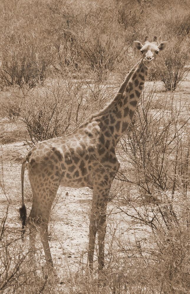 Afrika I