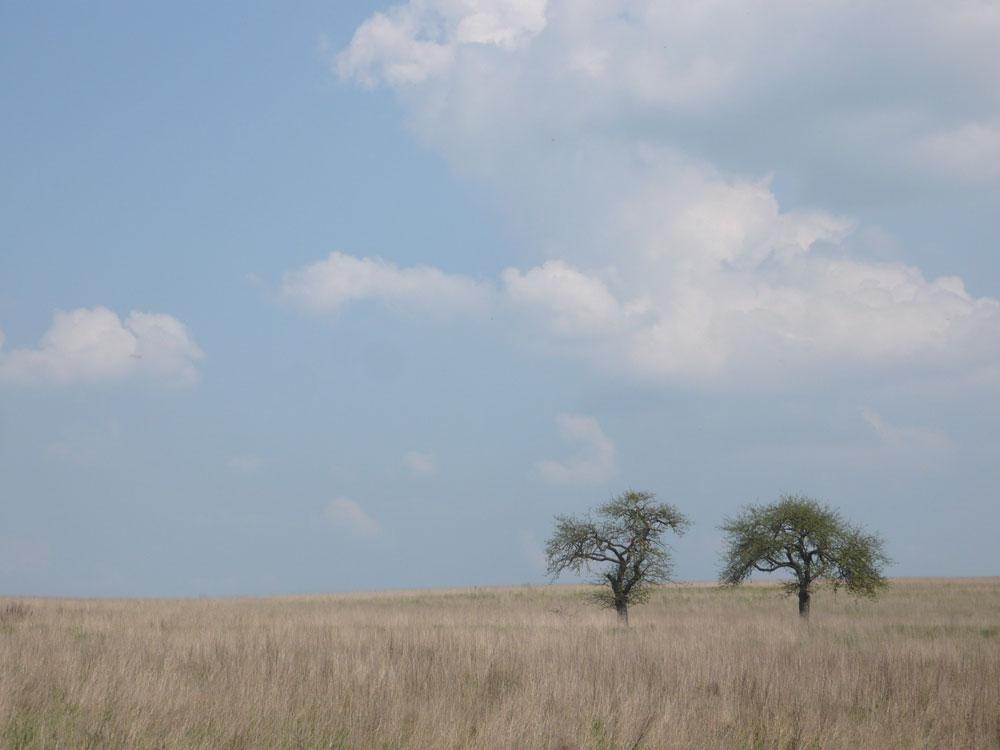 Afrika oder Eifel ?