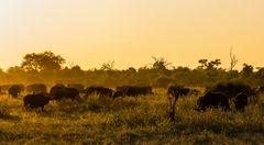 Afrikanische Sonne...
