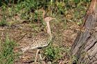 Afrikanische Vogelwelt