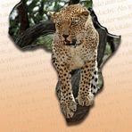 Afrikas Samtpfoten I