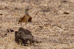 Afrikas Vogelwelt 2