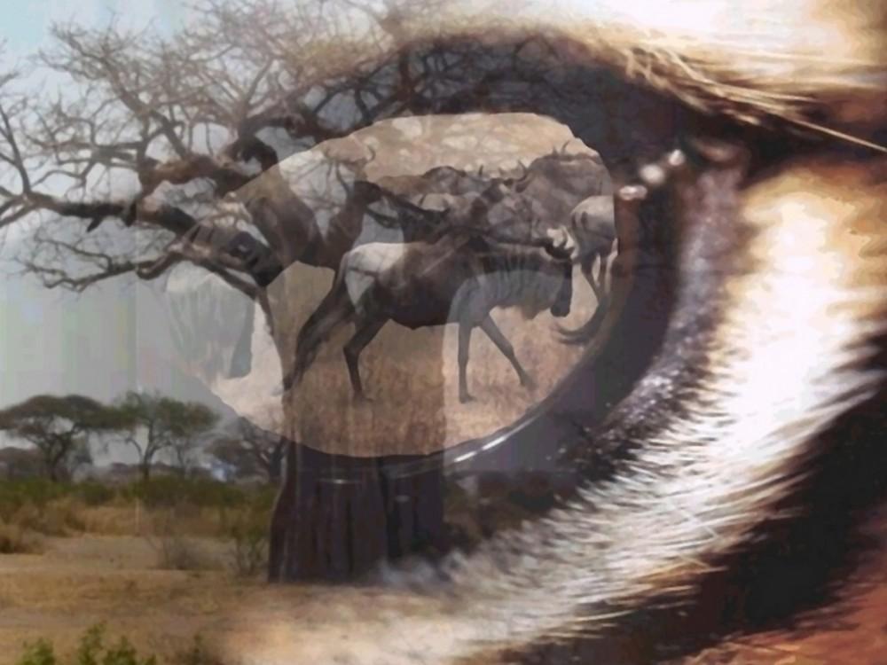 Afrique Dans l'oeil du Gnou