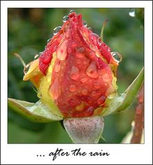 ... after the rain