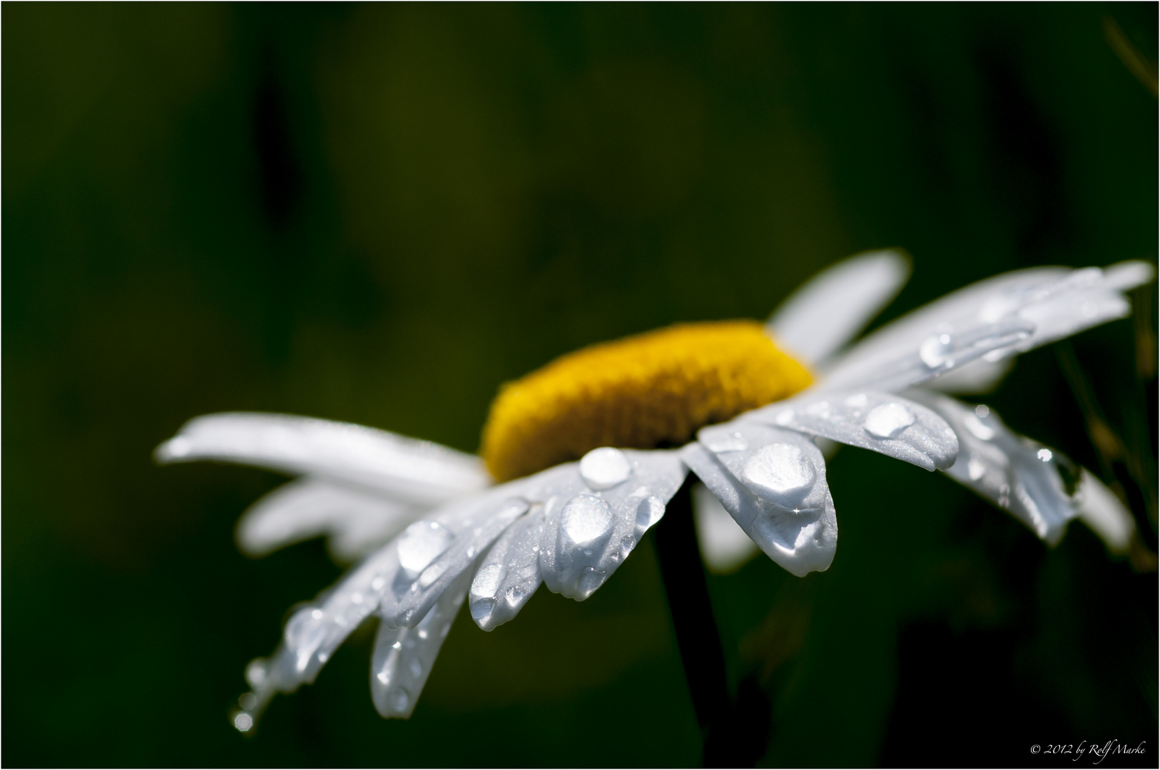 ... after the rain .....