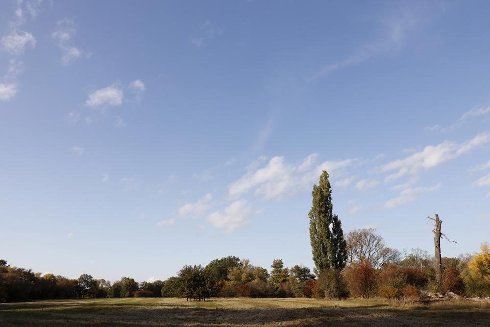 "Afternoon atmosphere in the floodplain ""Muldeaue"""