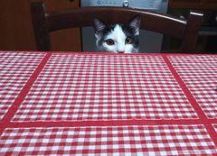 aggiungi un posto a tavola   -   add a seat at the table