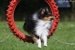 Agility - Sprung durch den Reifen (1)