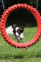 Agility - Sprung durch den Reifen (4)