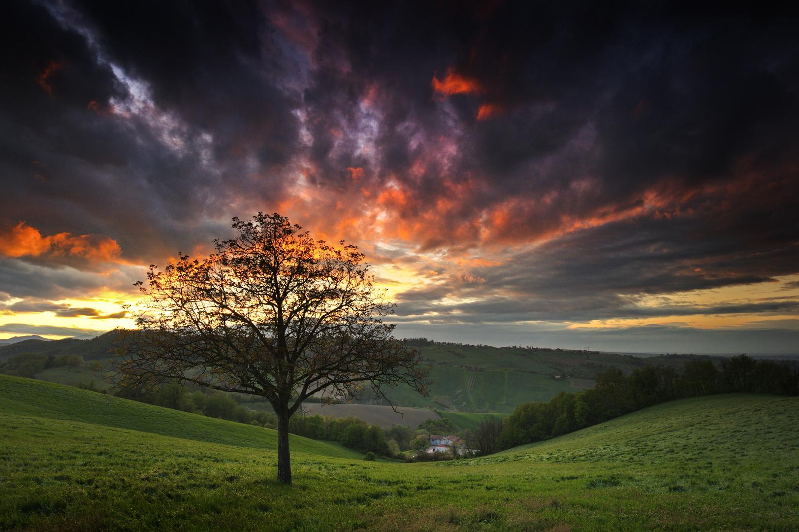 """Agorà/Sotto i riflettori: """" l'albero dei sogni """" - 1."""
