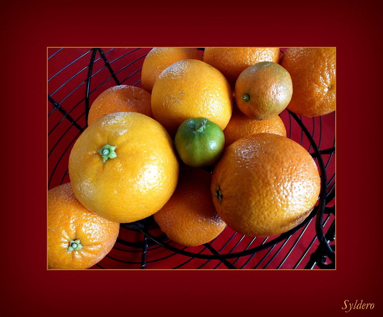 agrumes photo et image special oranges vision. Black Bedroom Furniture Sets. Home Design Ideas