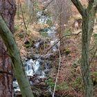 Agua entre las ramas