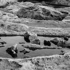 Agua, piedra y perro