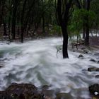Agua súbita en medio del bosque