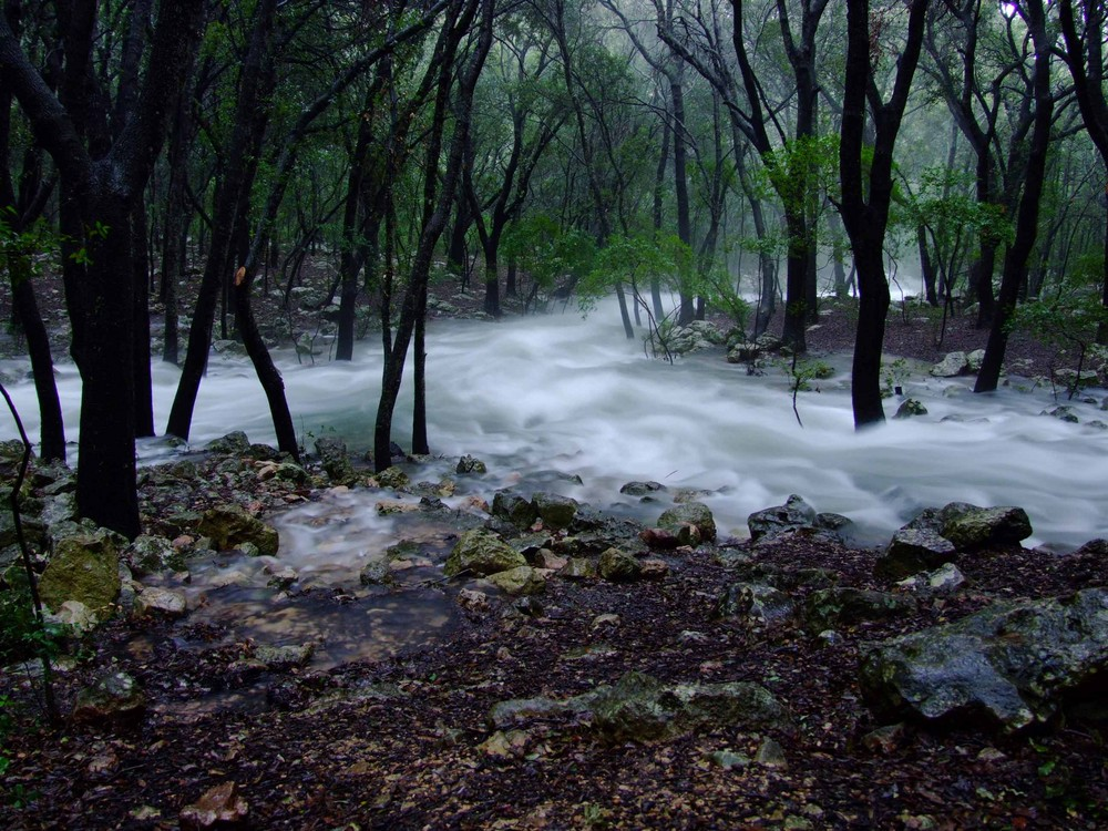 Agua súbita en medio del bosque(2)