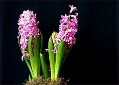 Ahnst du den Frühling?