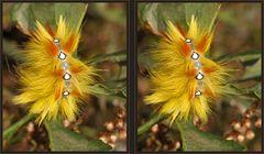 Ahorn-Rindeneule [3D]