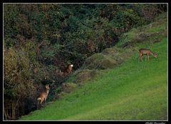..ai margini del bosco..