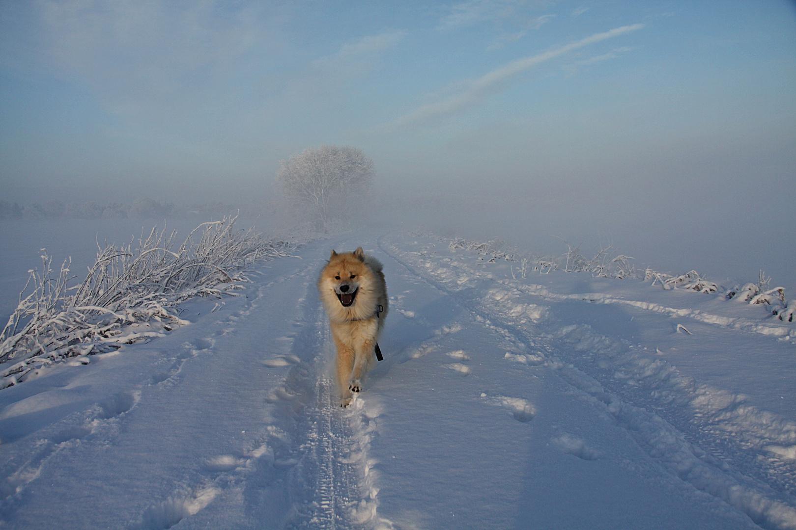 Aiko im Schnee