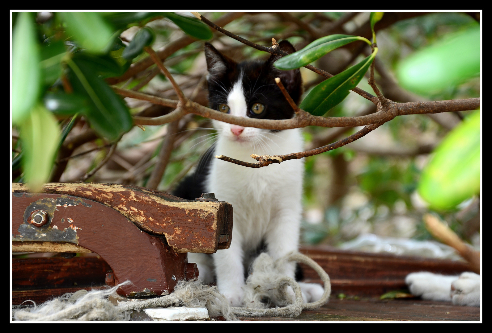 """"""" aire de jeux pour chats """""""