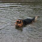 Aiutooooo… ma quanto è fredda quest'acqua?
