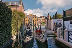 Akademia Venezia  2020
