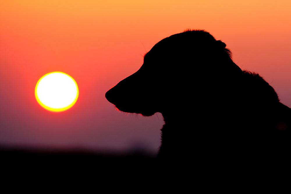 ...Akai im Sonnenaufgang...