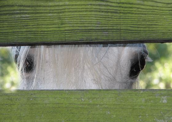 Akeeba through the fence