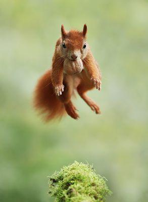 Lustige Tiere Fotos & Bilder auf fotocommunity