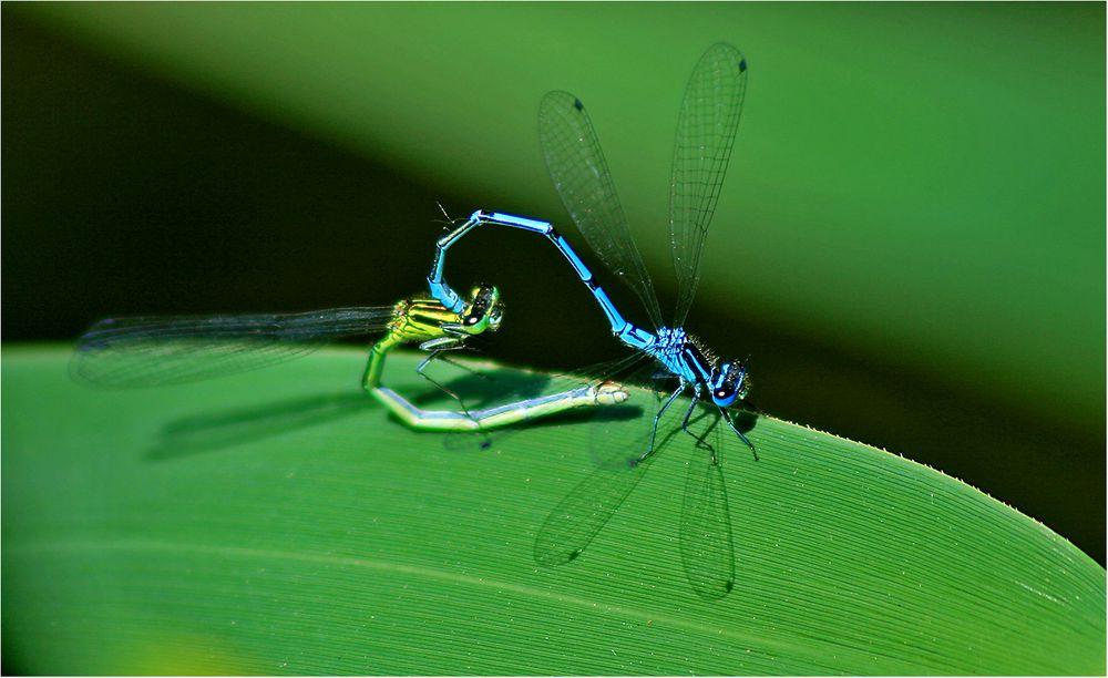 Akrobatik im Grünen