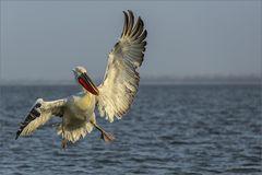 Akrobatische Landung....