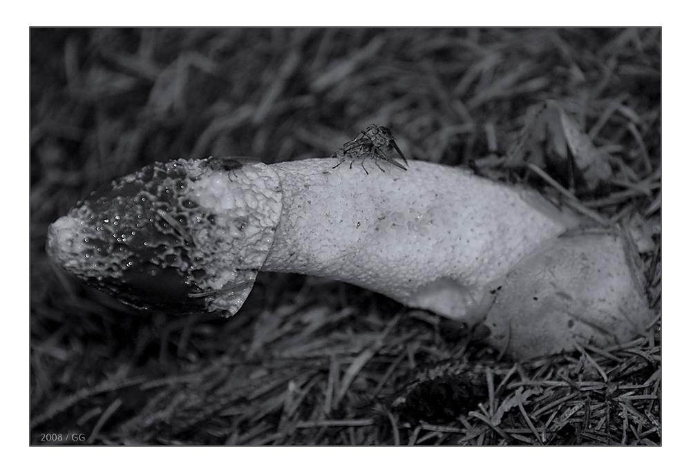 erotische literatur kostenlos Worms