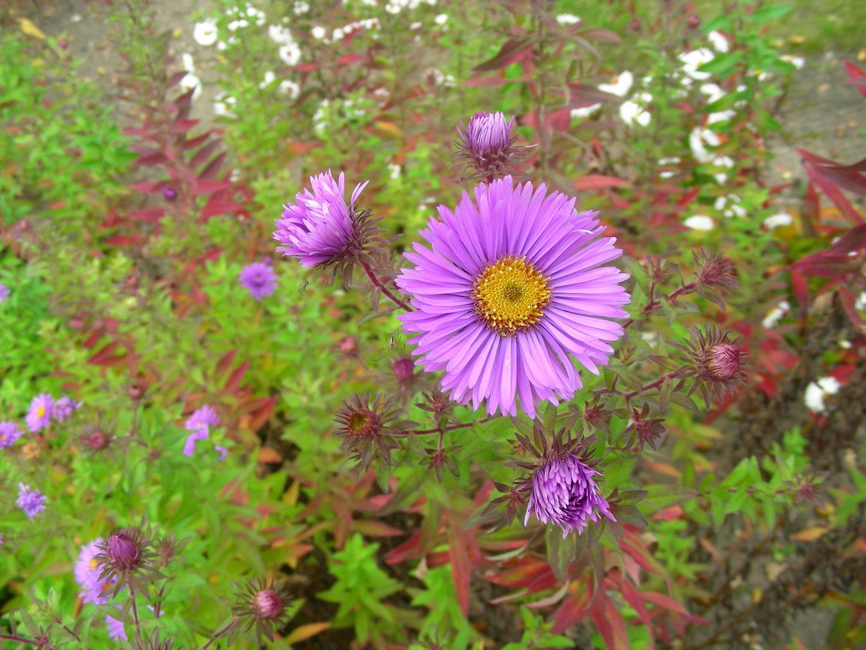 aktueller Blumengruß