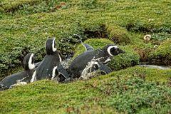 ¡Al agua pingüinos!