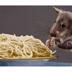 AL Dente .. Gambian pouched rat