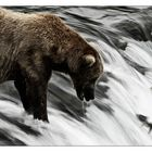 Alaska - GoliathWartet