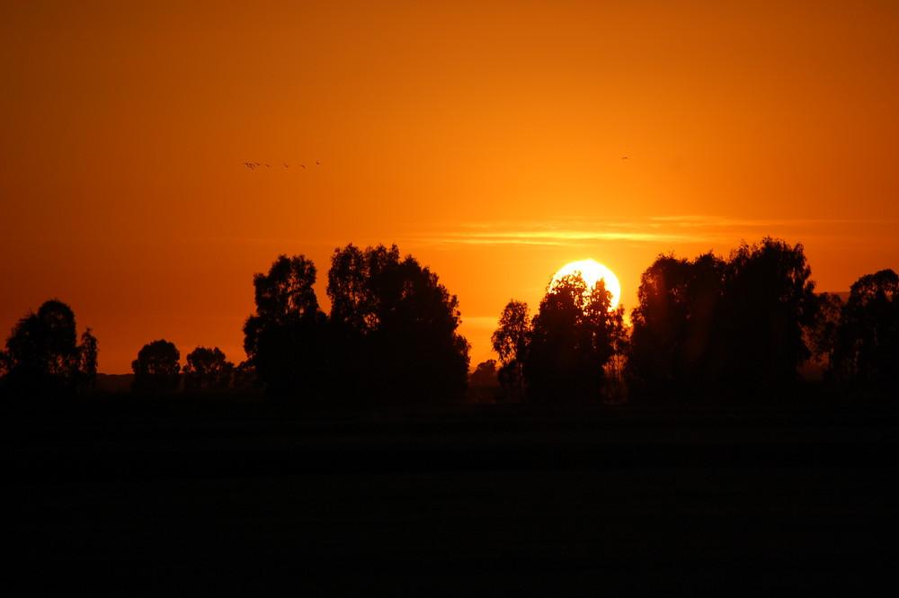 alba a Grosseto