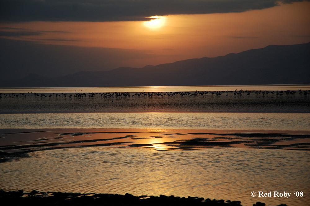 Alba Lake Natron (Tanzania)