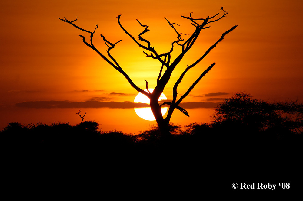 Alba Parco Serengeti - Tanzania