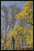 Alberi a primavera