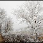 alberi di ghiaccio