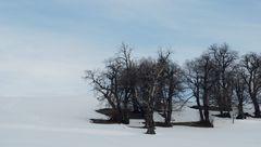 alberi nel bianco