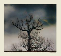 Alberi nella nebbia (10)