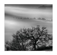 Alberi nella nebbia (11)