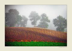 Alberi nella nebbia (12)