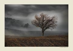 Alberi nella nebbia (14)