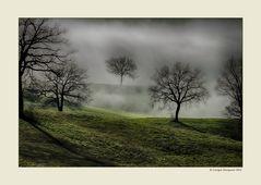 Alberi nella nebbia (15)