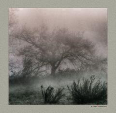 Alberi nella nebbia (3)